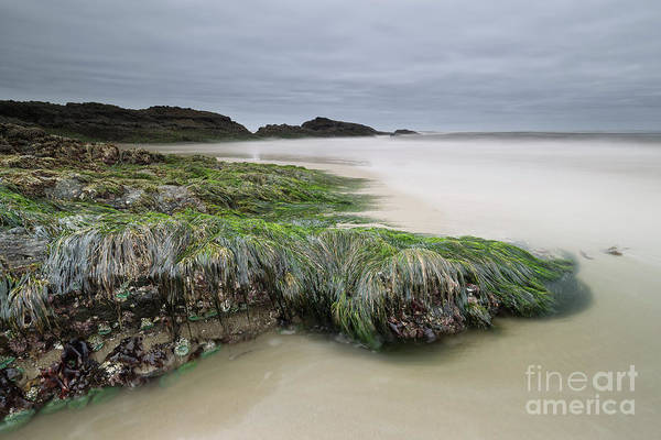 Low Tides Photograph - Only When It's Super Low Tide by Masako Metz