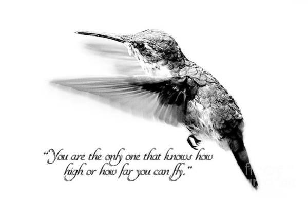 Rufous Hummingbird Wall Art - Photograph - Only You by Darren Fisher