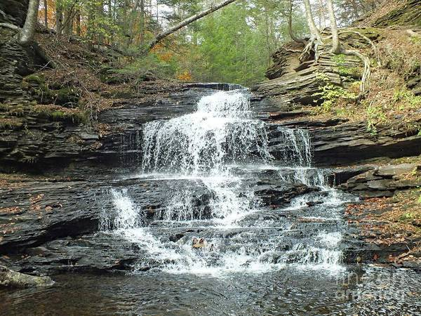 Onondaga Photograph - Onondaga 4 - Ricketts Glen by Cindy Treger