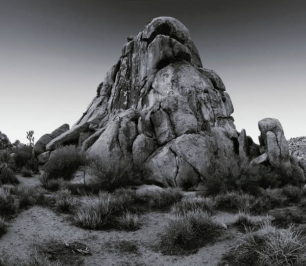 Photograph - Open Desert Perch - Black White by Paul Breitkreuz