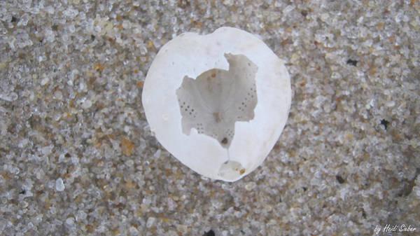 Photograph - Open Star-heart by Heidi Sieber