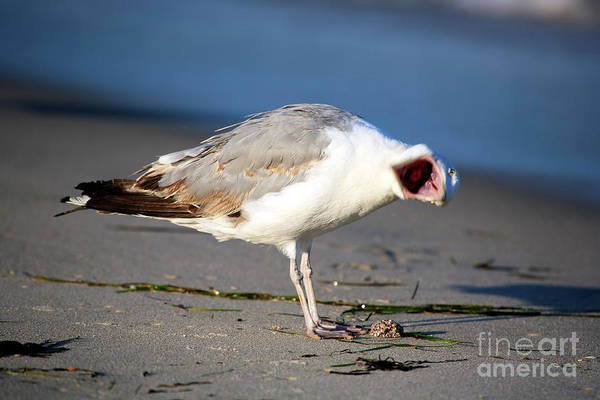 Photograph - Open Wide At Long Beach Island by John Rizzuto