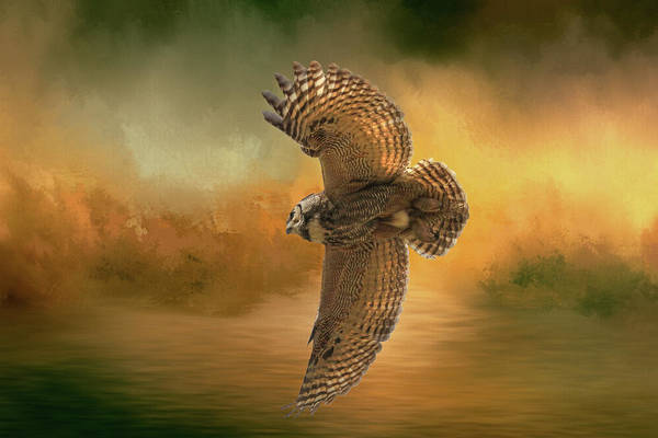 Owl In Flight Photograph - Open Wings by Donna Kennedy