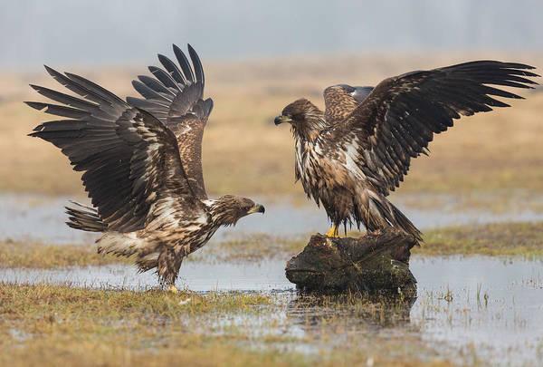 Wild Bird Photograph - Open Wings by Fabio Ferretto