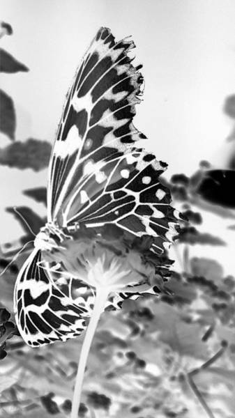 Photograph - Open Wings Negative B W by Rob Hans