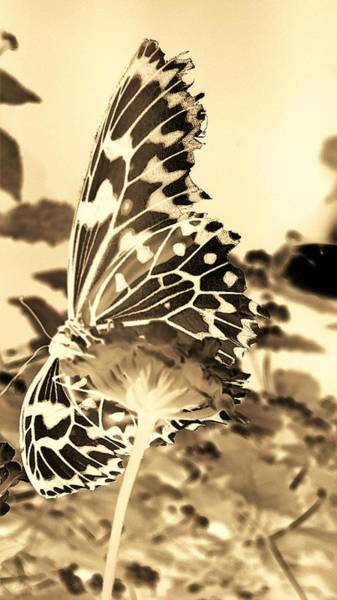 Photograph - Open Wings Negative Sepia by Rob Hans