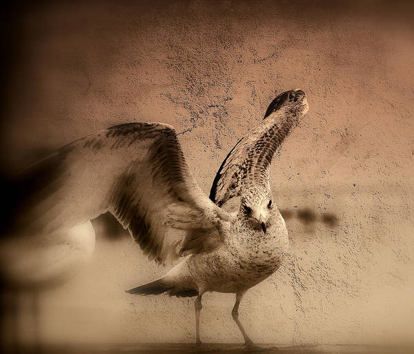Artful Photograph - Open Wings by Susanne Van Hulst