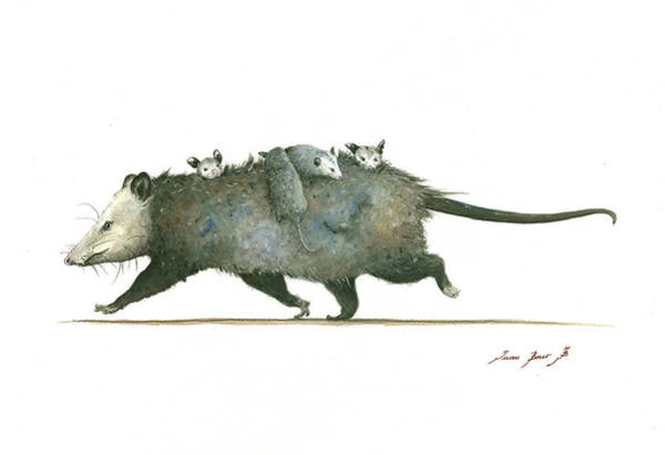 Wall Art - Painting - Opossum Family by Juan Bosco