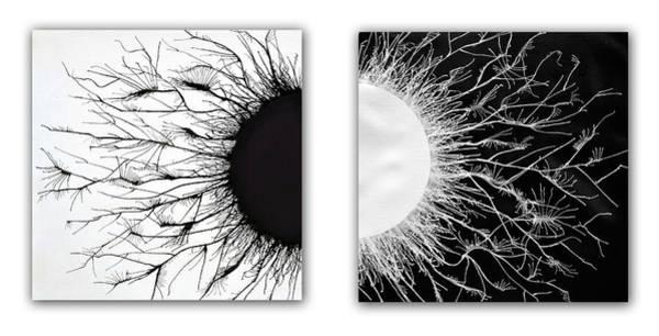 Spread Painting - Opposites by Sumit Mehndiratta