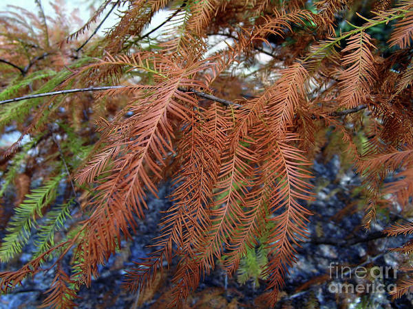 Photograph - Orange And Green Needles by D Hackett
