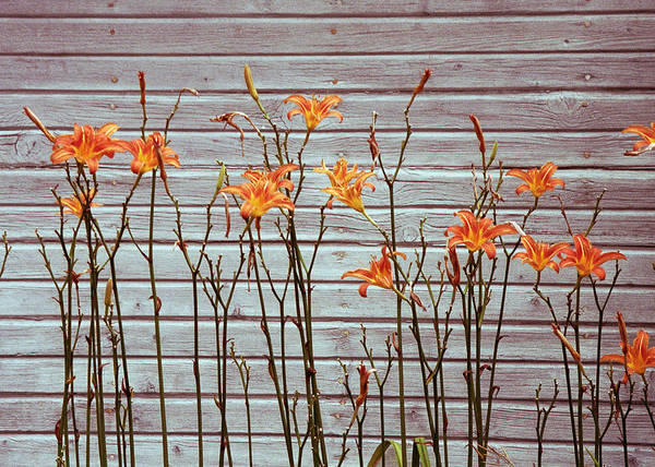 Photograph - Orange And Grey by Kenneth Campbell