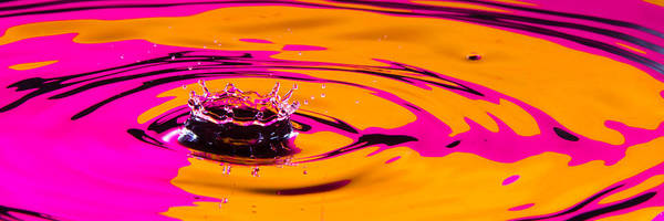 Photograph - Orange And Magenta Crown by SR Green