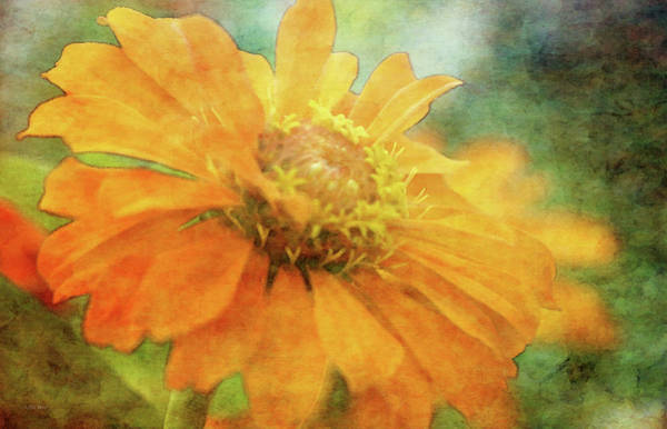 Photograph - Orange And Mint 3789 Idp_2 by Steven Ward