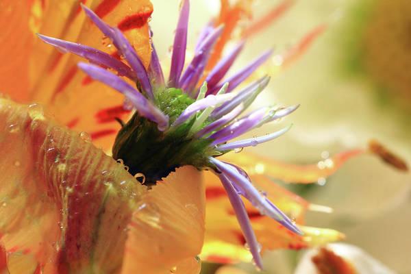 Photograph - Orange And Purple Flowers by Angela Murdock