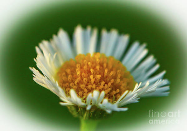 Photograph - Orange And White Flower by Tom Claud