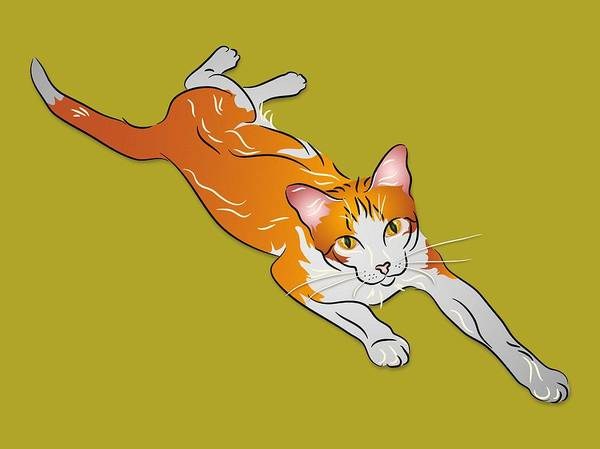 Digital Art - Orange And White Tabby Cat by MM Anderson