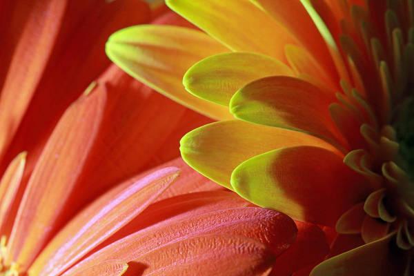 Photograph - Orange And Yellow Petals by Angela Murdock