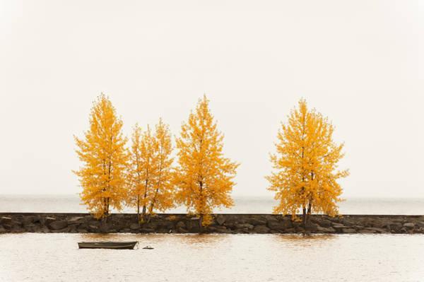 Photograph - Orange Autumn by U Schade