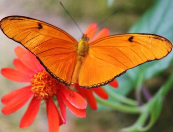 Wall Art - Photograph - Orange Beauty by Valia Bradshaw