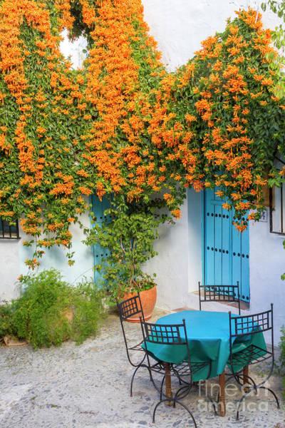 Wall Art - Photograph - Orange Blossoms by Heiko Koehrer-Wagner