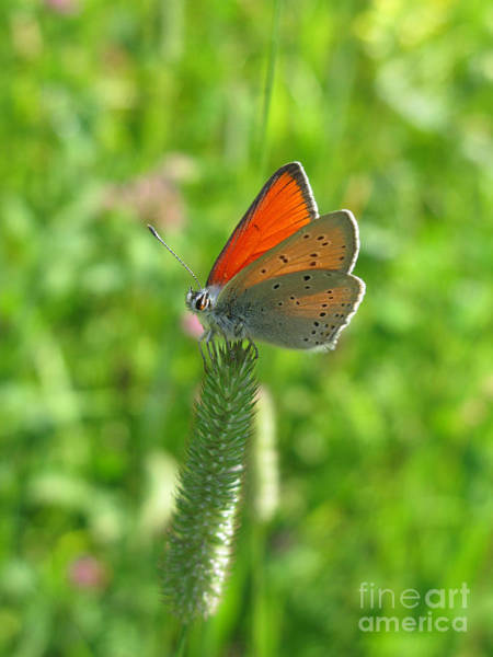 Photograph - Orange Butterfly 5144 by Murielle Sunier