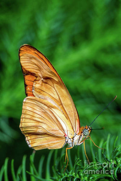 Wall Art - Photograph - Orange Butterfly by Todd Bielby