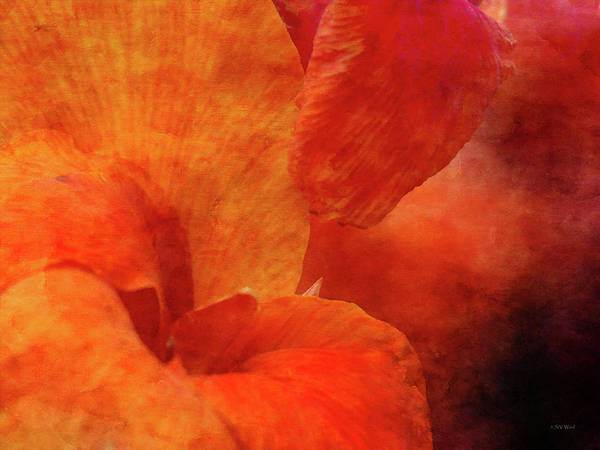 Photograph - Orange Canna 4206 Idp_2 by Steven Ward