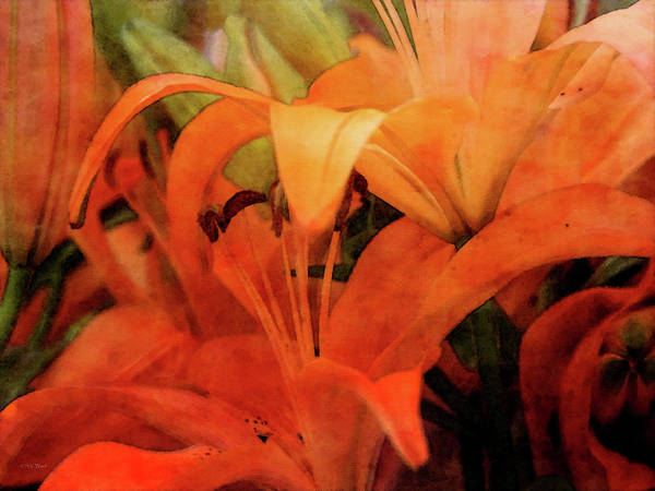 Photograph - Orange Canopy 1017 Idp_2 by Steven Ward