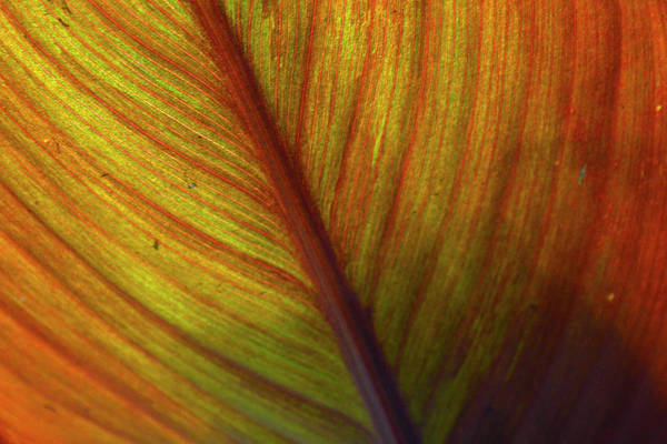 Photograph - Orange Canvas by Bruce Gourley