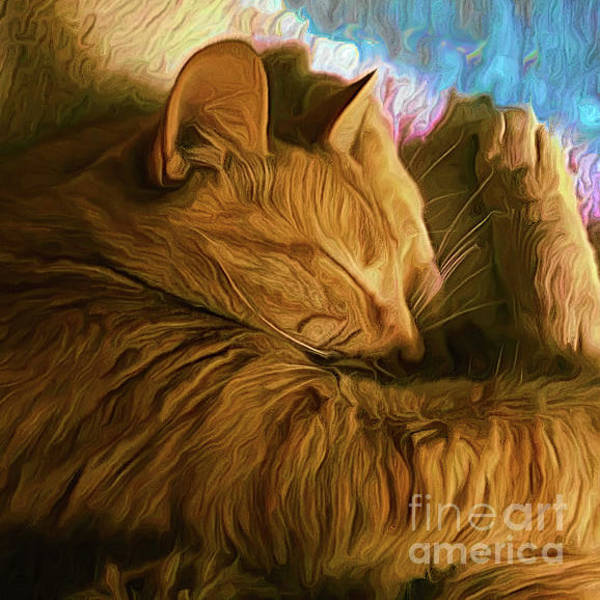 Orange Tabby Photograph - Orange Cat Sleepy Time by Luther Fine Art