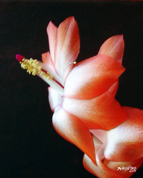 Orange Christmas Cactus Art Print