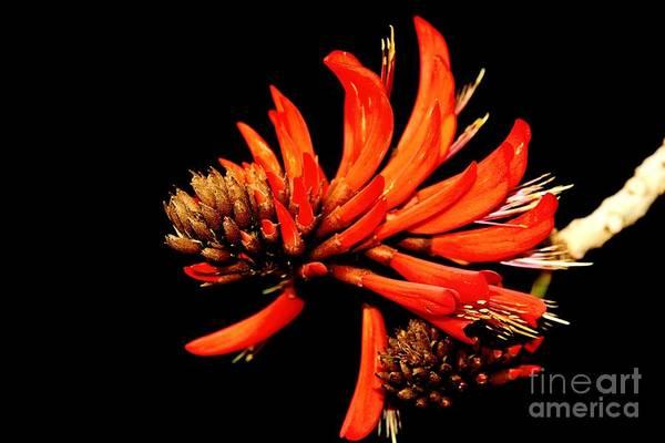 Photograph - Orange Clover II by Stephen Mitchell
