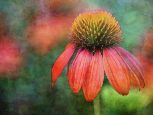 Orange Coneflower 2576 Idp_2 Art Print