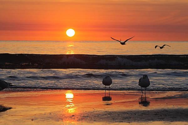 Photograph - Orange Dawn Day by Robert Banach