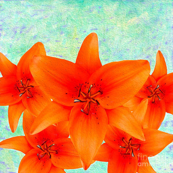 D Day Photograph - Orange Day Lily Abstract by Laura D Young