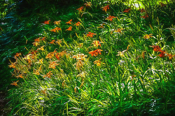 Photograph - Orange Daylilies by Bellesouth Studio