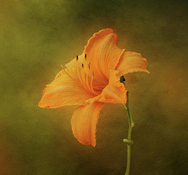 Photograph - Orange Daylily by Sandy Keeton