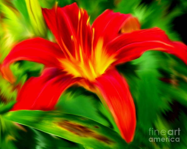 Photograph - Orange Daylily by Smilin Eyes  Treasures