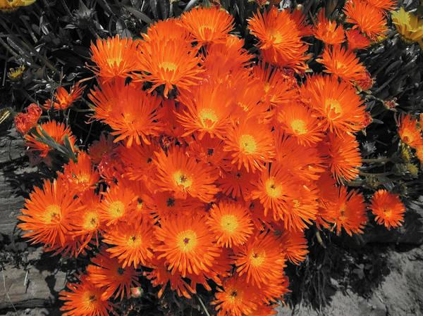 Foreshore Photograph - Orange by Douglas Barnard
