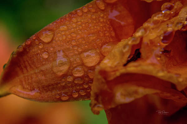 Photograph - Orange Drops by Bill Posner