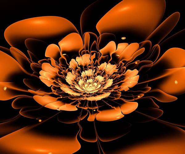 Wall Art - Digital Art - Orange Flower  by Anastasiya Malakhova