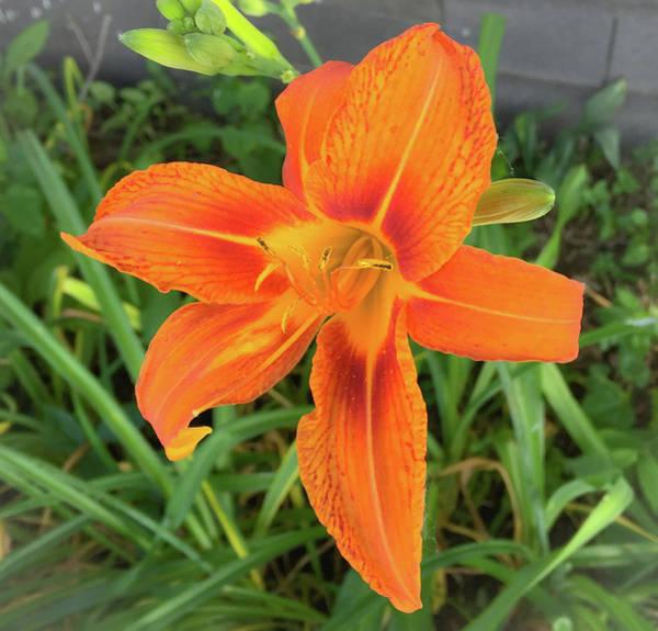 Photograph - Orange Flower by Andrea Love