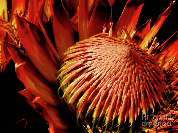 Photograph - Orange Flower Beauty by Susanne Van Hulst