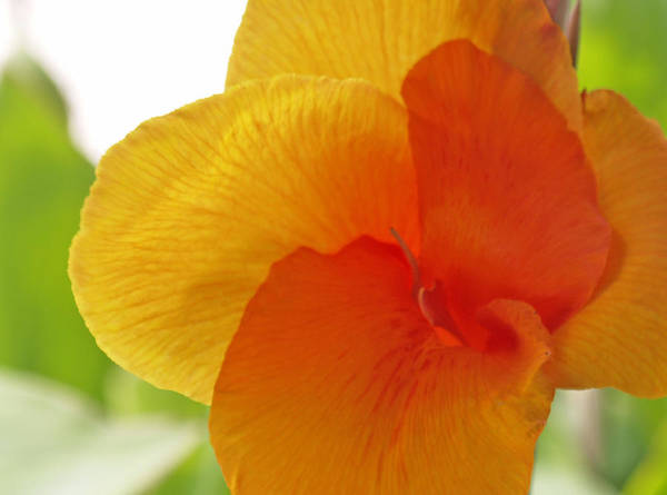 Photograph - Orange Flower by James Granberry