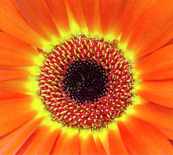 Photograph - Orange Flower Macro by Bob Slitzan