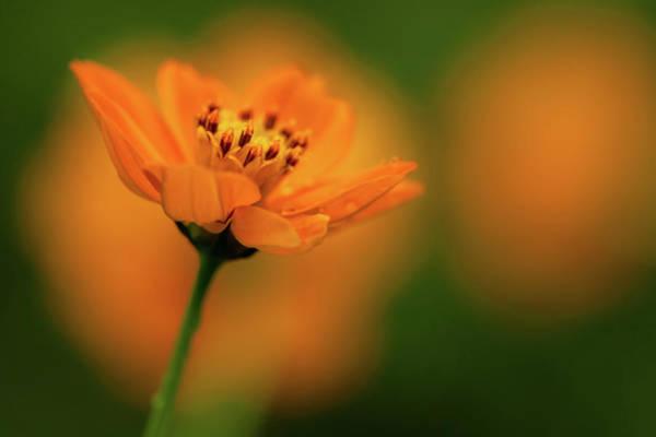 Photograph - Orange Flower by Mahesh Balasubramanian