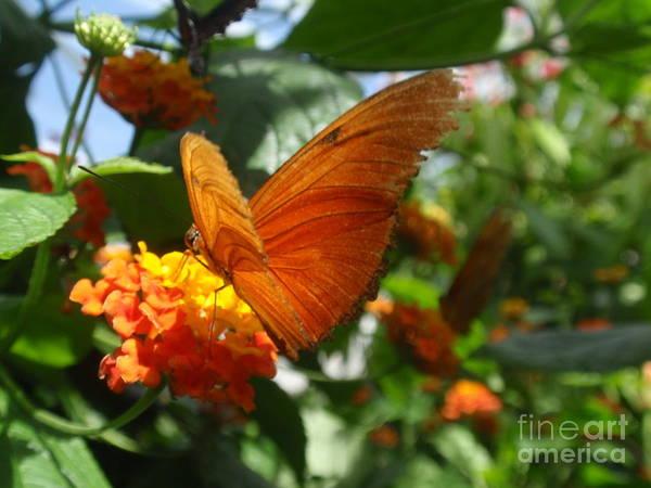 Wall Art - Photograph - Orange Flying Beauty by Valia Bradshaw