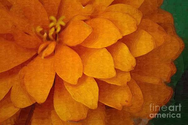 Photograph - Orange Glow by Donna Bentley