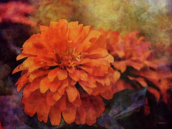 Photograph - Orange Gold Zinnia 3055 Idp_2 by Steven Ward
