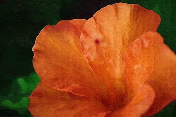 Photograph - Orange Hibiscus by Donna Bentley